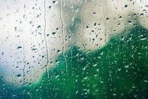 hedge behind glass, rain drops
