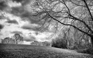 tree by fallow ground