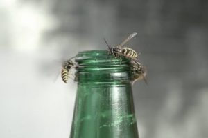 wasps on beer bottle